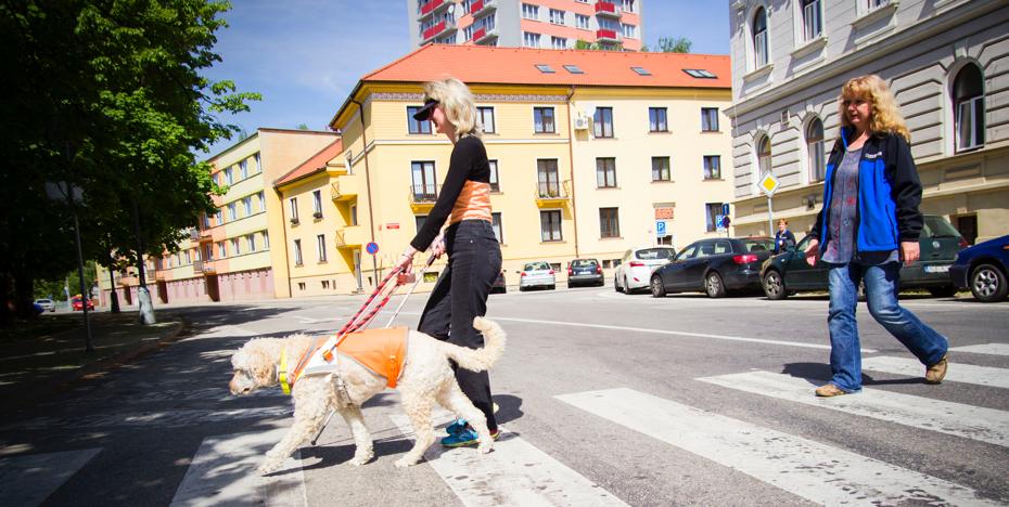 Obrázek paní přechazející přechod s vodícím psem