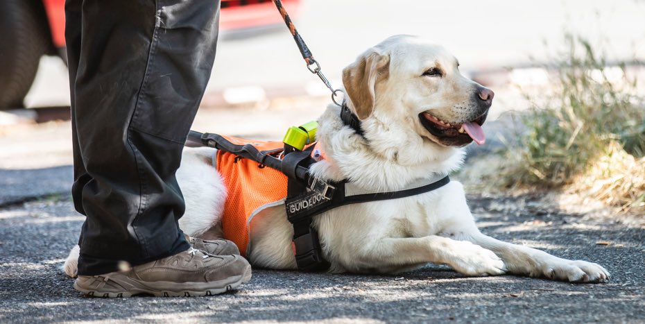 Fotka klienta s vodícím psem Retrievrem